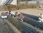 農業生産活動